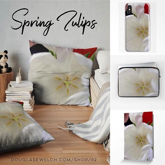 Spring is Here!  Get these Glowing White Tulip Cards, Pillows, Cases, Totes and More!