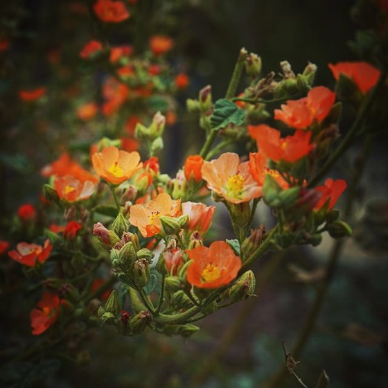 Orange flowers on an unidentified plant via Instagram