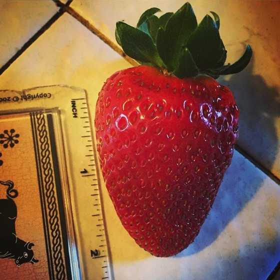 Tasty Strawberry from the container garden via My Instagram