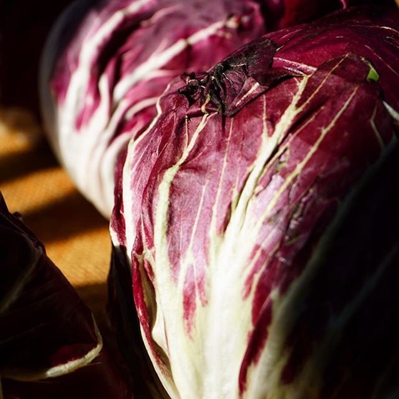 Red cabbage Closeup - Follow Me On Instagram!
