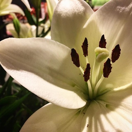 Lily -- via My Instagram