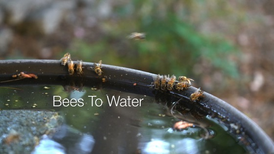Bees To Water - A Minute In The Garden 65 from A Gardener's Notebook
