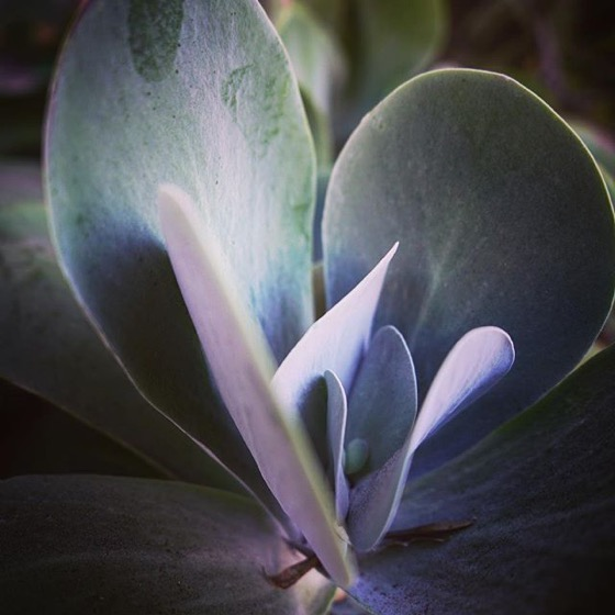 Silver Succulent -- Follow Me On Instagram!