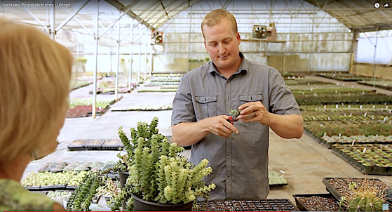 How to Propagate Succulents via Gardening Gone Wild