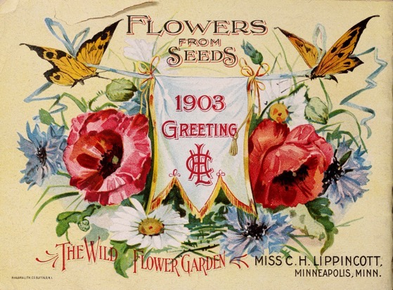 Historical Seed Catalogs: Flower seeds by Miss C.H. Lippincott  (1903) - 8 in a series