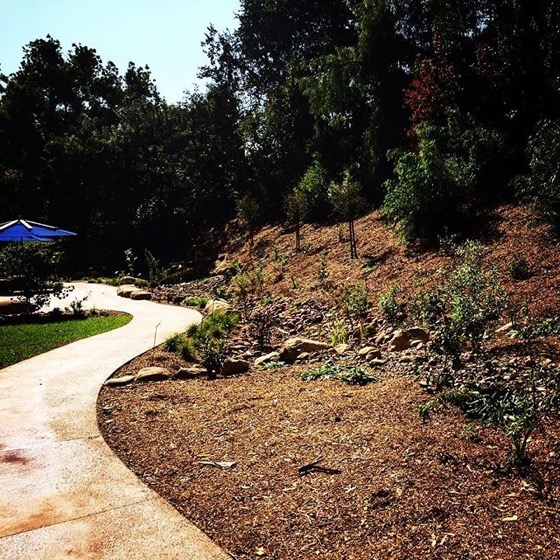 New drought-tolerant native garden with swale at Cal Poly Pomona