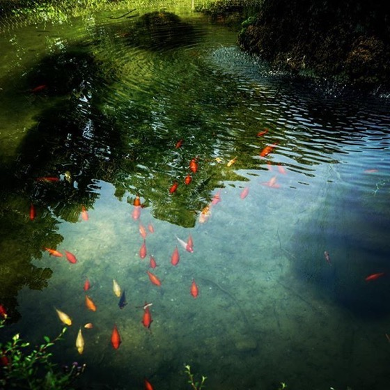 Fish pond, Villa Reale, Monza, Italy via Instagram