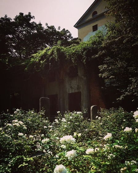 Roses and ruins via Instagram