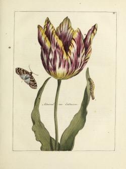 Historical Garden Books: Nederlandsch bloemwerk (1794) - 23 in a Series