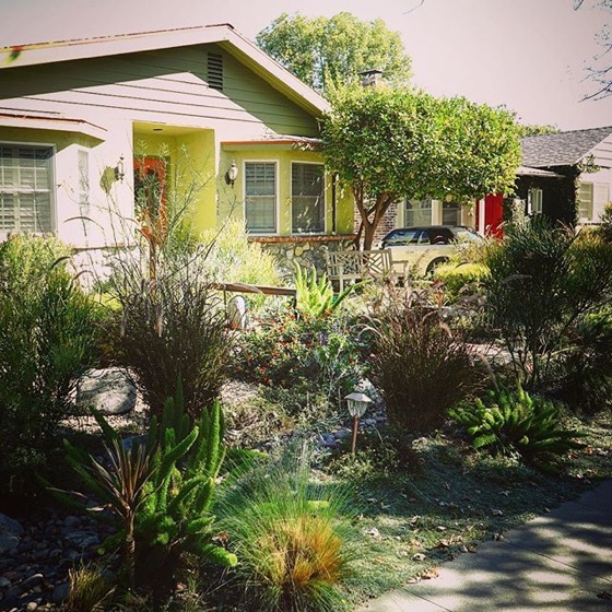 Local Waterwise Garden, Sherman Oaks, California via Instagram