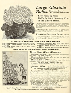 Historical Seed Catalogs: Flowers for springtime by Miss Mary E. Martin (1910) - 16 in a series