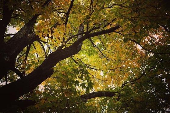 Golden Autumn Leaves via Instagram
