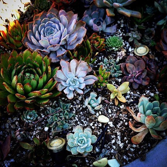 Succulent Planter, Sherman Oaks, California via Instagram
