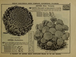Historical Seed Catalogs: [Catalog of] the Great Northern Seed Co. (1901) - 18 in a series