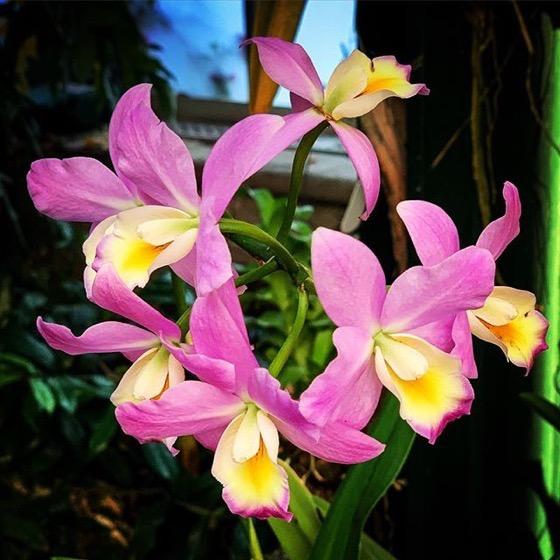 Orchid 2, Huntington Gardens Conservatory via Instagram