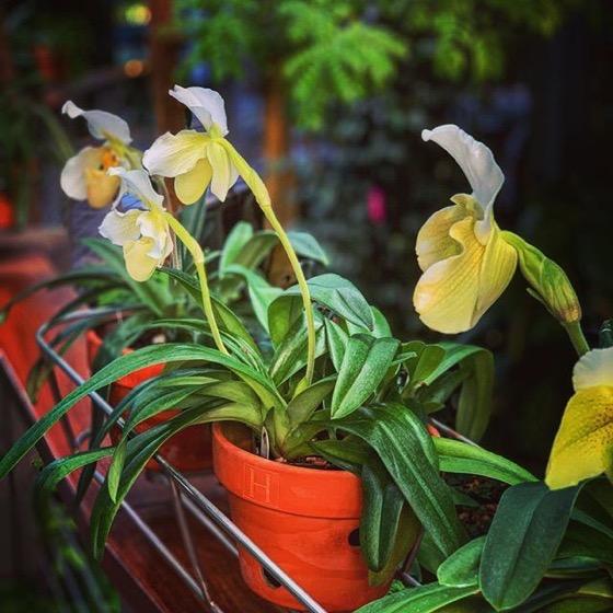 Orchid 6, Huntington Gardens Conservatory via Instagram