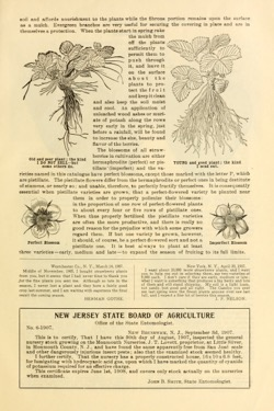 Historical Seed Catalogs: The strawberry for everybody by J.T. Lovett Company (1908) - 17 in a series