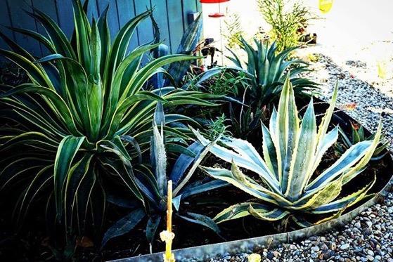 More succulents, Sherman Oaks, California via Instagram
