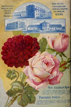 Historical Seed Catalogs: Farm, flower & garden seeds by A.A. Berry Seed Co (1905) - 21 in a series