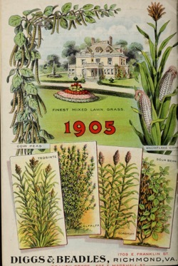 Historical Seed Catalogs: 1905 annual catalog : garden, farm & flower seeds by Diggs & Beadles Seed Co., Inc. - 20 in a series