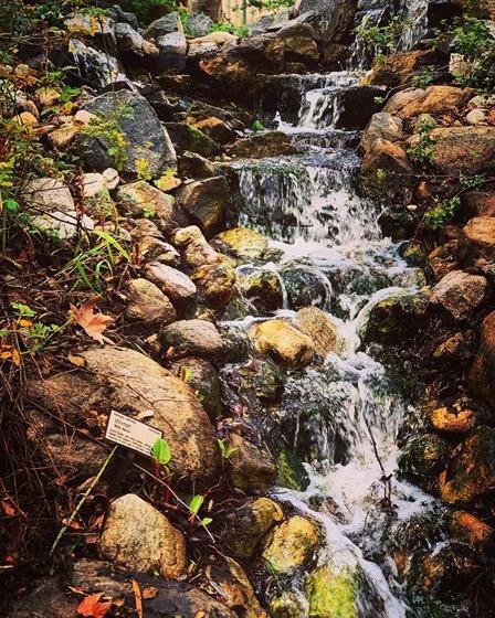 Waterfall/Rivulet, BioTrek Ethnobotany Garden, Cal Poly Pomona via Instagram