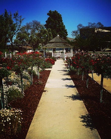 Another Scene in the Cal Poly Pomona Rose Garden via Instagram