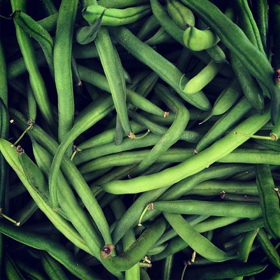 Green Bean Still Life