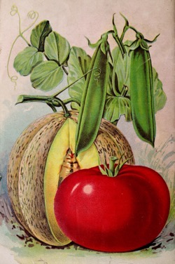 Historical Seed Catalogs: Seed annual by Adolphus Wysong (1907) - 29 in a series