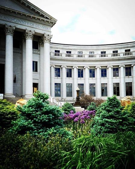 Alliums and Evergreens, Denver City Hall