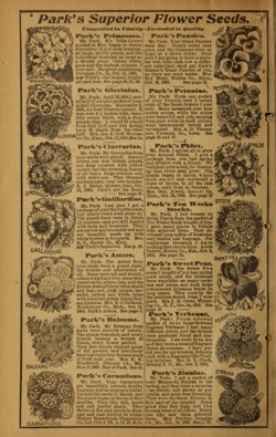 Historical Seed Catalogs: Park's floral guide (1906) - 30 in a series