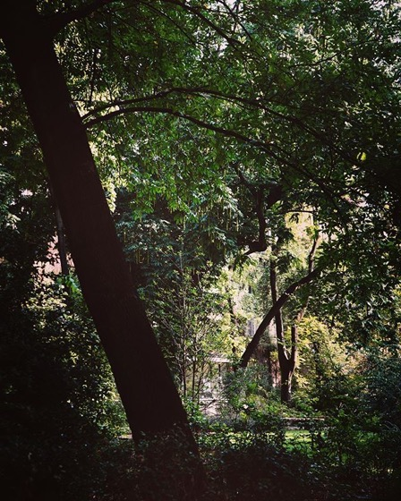 A scene from the Orto Botanico in the Brera district of Milan  via Instagram