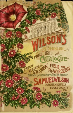 Historical Seed Catalogs: Wilson's 15th annual price list and catalogue of fresh and reliable garden, field, and flower seeds (1891) - 34 in a series