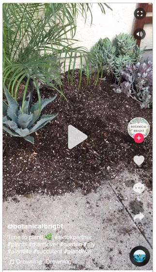 Captivating Cactus: Time to plant (cactus) via Botanical Bright on TicTok [Video]