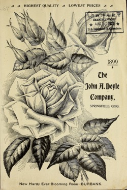 Historical Seed Catalogs: The John A. Doyle Company (1899) - 38 in a series