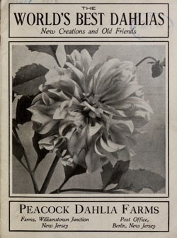 Dazzling Dahlias - 9 in a series - World's best dahlias : new creations and old friends / Peacock Dahlia Farms. (1918)