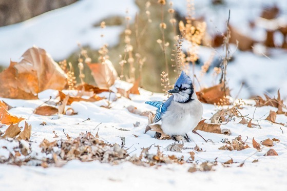 To Help Birds This Winter, Go Easy on Fall Yard Work via Audubon