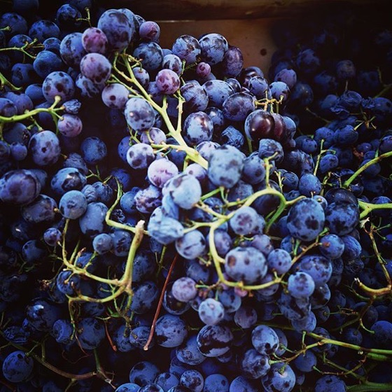"Lovely grapes, Pop Up ""Beach"" and Market with DJ via Instagram"