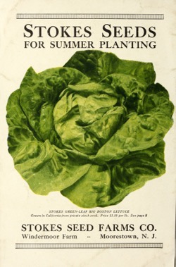 Historical Seed Catalogs: Stokes seeds for summer planting : July 15, 1918 - 43 in a series