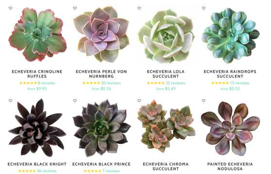 Captivating Cactus and Striking Succulents: 23 in a series - Echeveria from Succulents Box