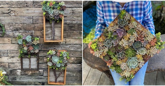Miami Succulent Garden Nursery Sells The Most Adorable Cactus Creations