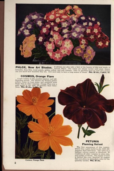 Historical Seed Catalogs: A book for garden lovers: Schling's seeds annual catalogue (1932) - 58 in a series
