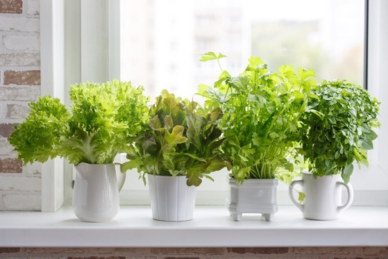 Three Ways to Turn Your Apartment into a Sustainable Garden via JSTOR Daily