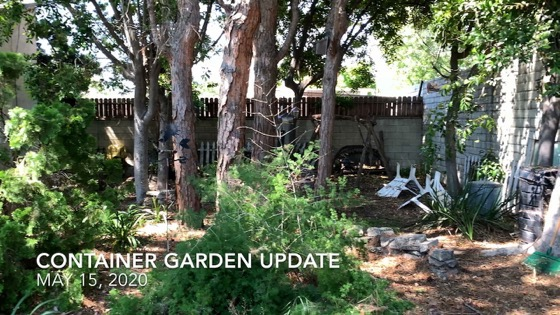 Container Garden Update - May 15, 2020: Fertilizing, Flowers, And More