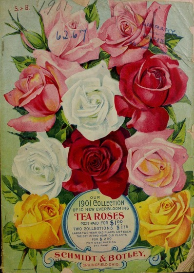 Historical Seed Catalogs: Our 1901 collection of 10 new everblooming tea roses / Schmidt & Botley. (1901) - 63 in a series
