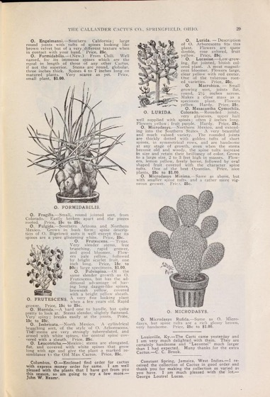 Historical Seed Catalogs:  Seventh annual catalogue of cacti : euphorbias, aloes, agaves, succulents and novelty plants (1906) by Callander Cactus Co - 66 in a series