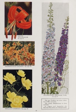 Historical Seed Catalogs: Garden novelties, 1937 / Bristol Nurseries, Inc.. - 64 in a series