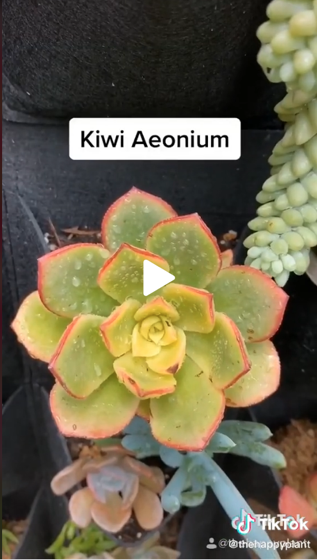 Captivating Cactus and Striking Succulents - 36 in a series - Succulent Names via The Happy Plant on Tiktok