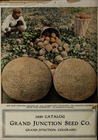Historical Seed Catalogs - 68 in a series - Mile High Garden, Field And Flower Seeds/Grand Junction Seed Co. (1920)