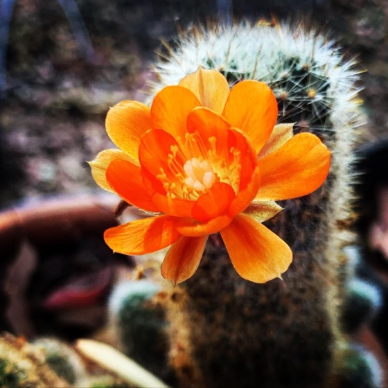Tiny Cactus Flower Appeared Overnight via Instagram