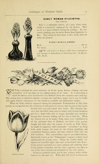 Historical Seed Catalogs - 73 in a series - Catalogue of Holland bulbs and plants for fall planting.by Hiram Sibley & Co (1882)